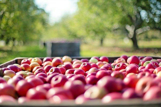 Pegno rotativo sui prodotti DOP e IGP: accesso al credito per le imprese agricole e della pesca