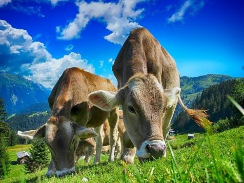 Modello 4 informatizzato per gli animali di allevamento: rinviata la partenza della procedura