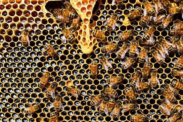 Corte di Giustizia UE: la Commissione era stata correttamente informata dalla Francia sull'urgenza di intervenire a protezione delle api